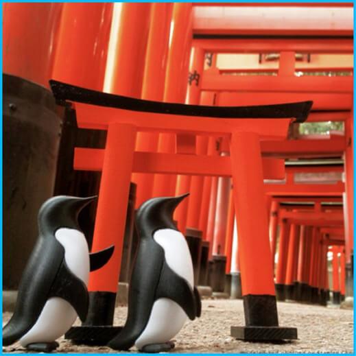 與企鵝暢遊日本