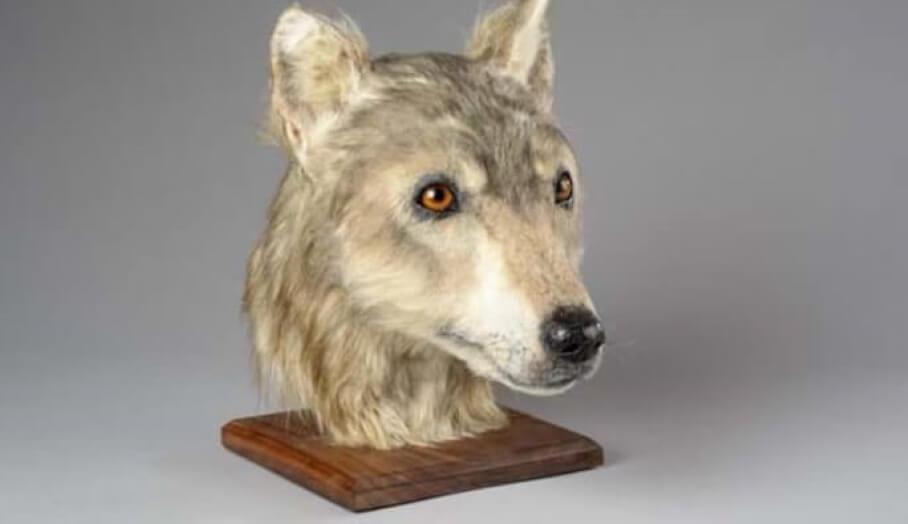 透過3D打印進行新石器時代的動物頭骨重建