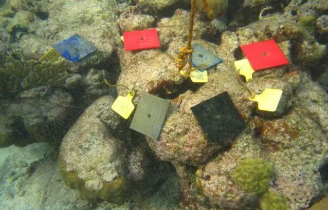 使用3D打印拯救海洋生物